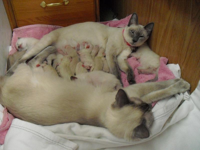 Sofia & Shania with their babies